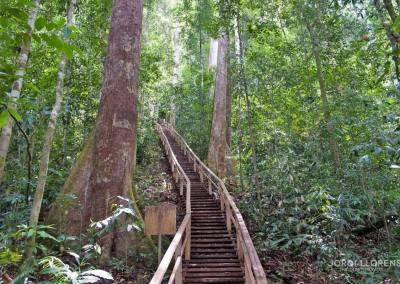Parque Nacional de Ulu Temburong
