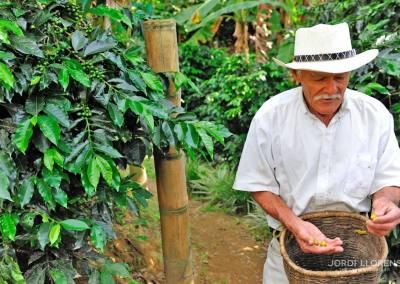 Don Elías, Eje Cafetero