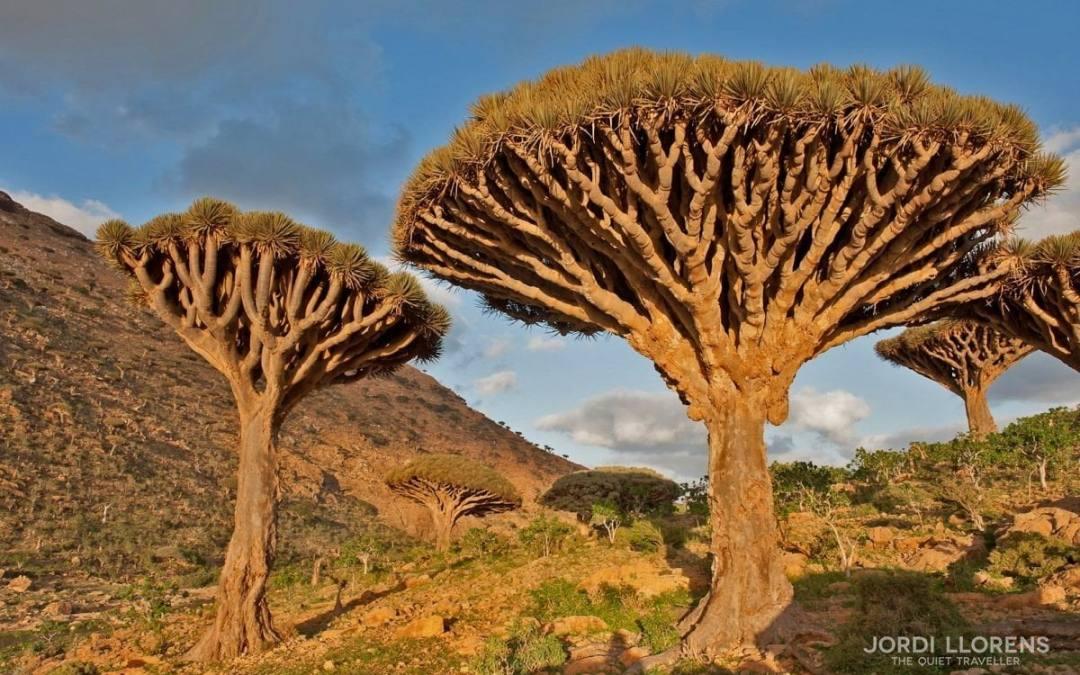 Socotra, un paradís oblidat a l'Índic