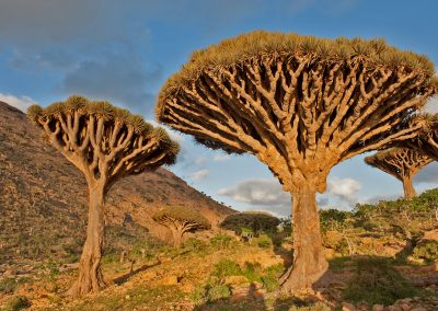 Socotra, a forgotten paradise in the Indian Ocean