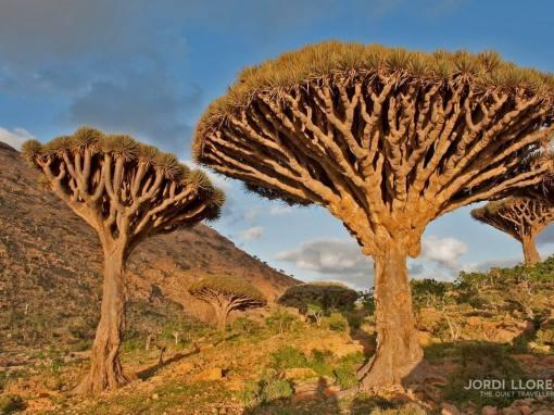 Socotra, un paraíso olvidado en el Índico