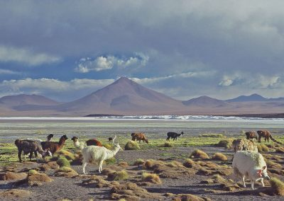 Bolivia, the Lagoons and the Desert of Salt