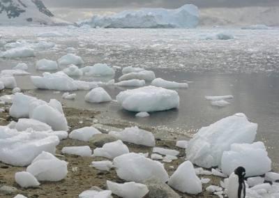 Bahía Neko, Península Antártica