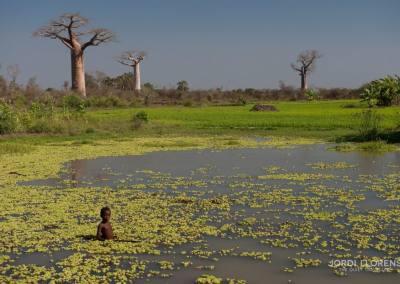 Baobabs en Morondava