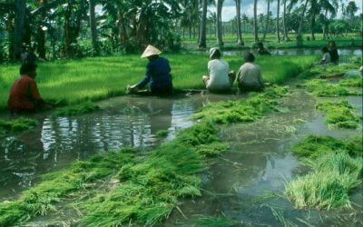 Islas de Nusa Tenggara: Sumba