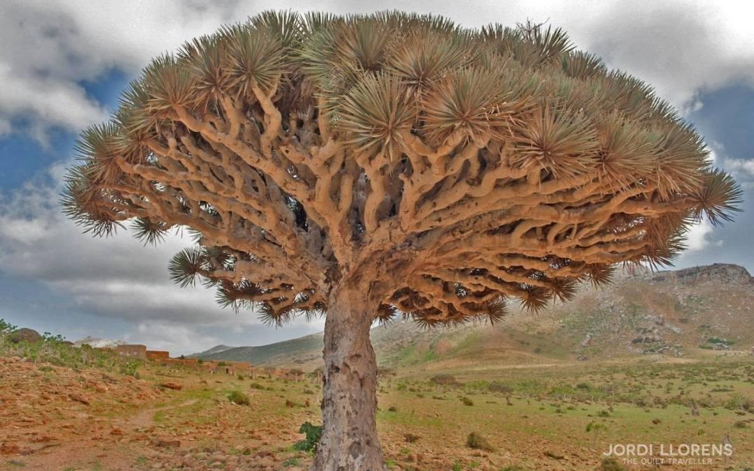 Socotra, un paraiso olvidado del Índico