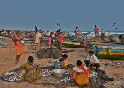 Acaba de llegar la pesca en la playa de Puri