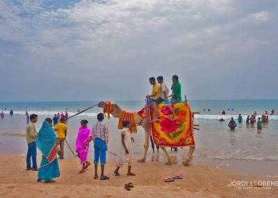 Un camello en la playa de Puri