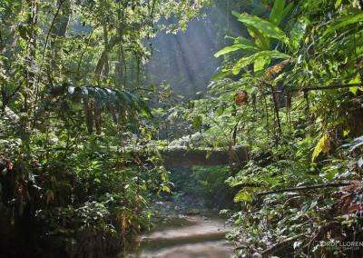 Los troncos se utilizaban para cruzar ríos